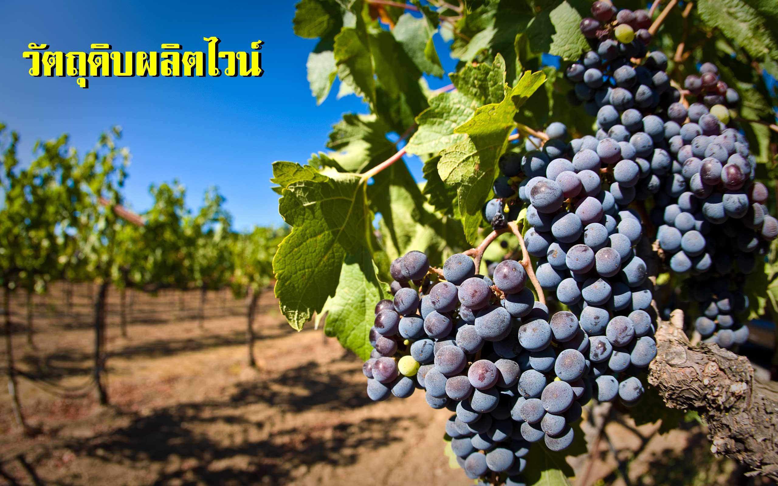 de_schilderachtige_wijngaarden-rond-ancenis